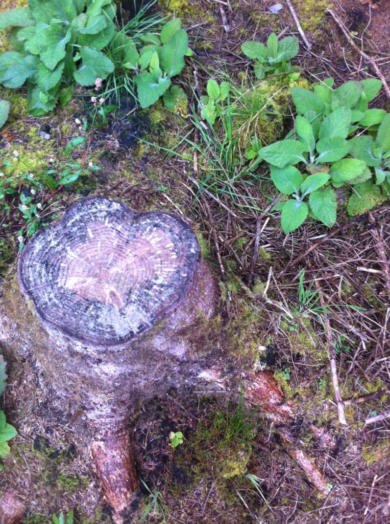 dad tree stump