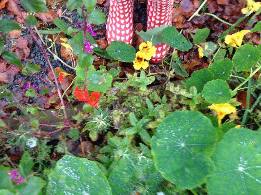 adrian leaves
