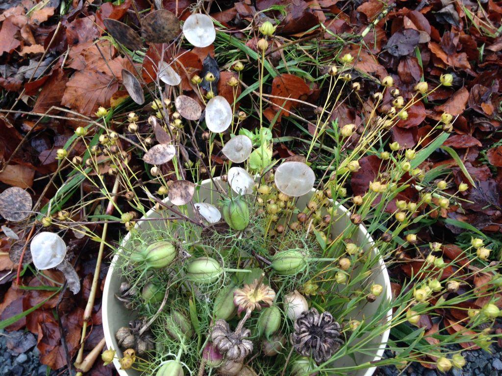 adrian seeds