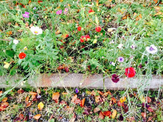 aut flowers