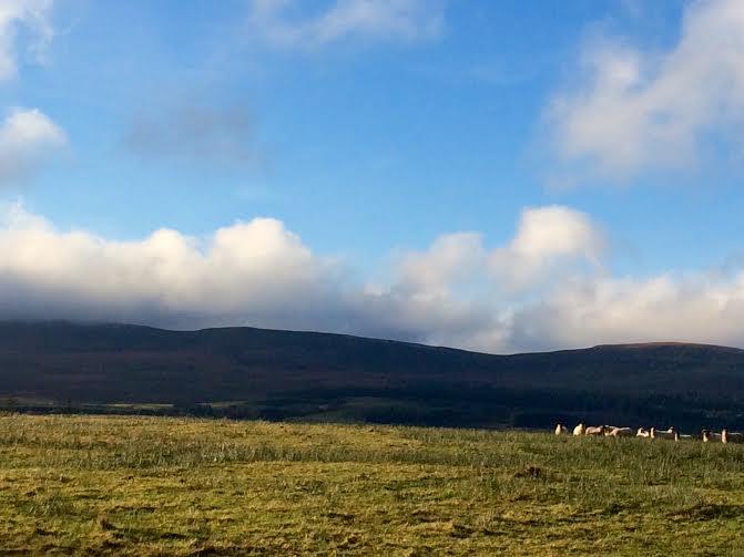 mountain dark with sheep